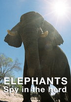 Elephants - Spy in the Herd